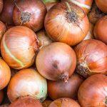 Yellow-Stuttgarter-OnionsBC4__67131.1581022826